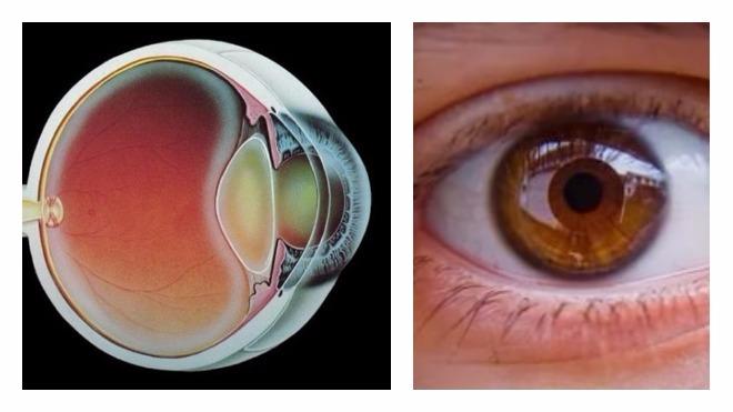 Почему происходит и чем опасно нарушение зрения у взрослых и детей